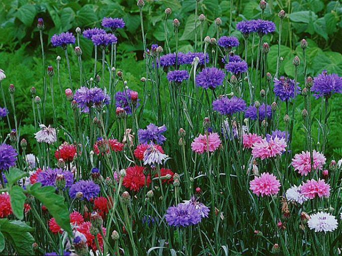 Signification des différentes fleurs - Umubyeyi magazine